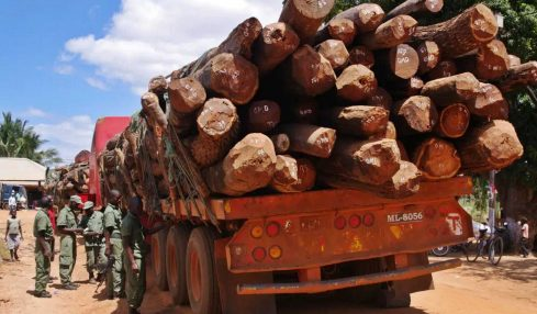 image of illegal wood smuggling in Mozambique