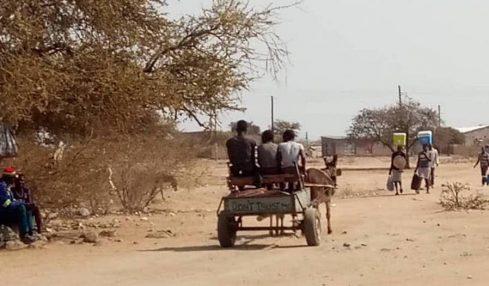 Donkey rustlers profit off wildlife trafficking routes