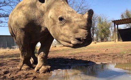 Tech solutions for rhino trade