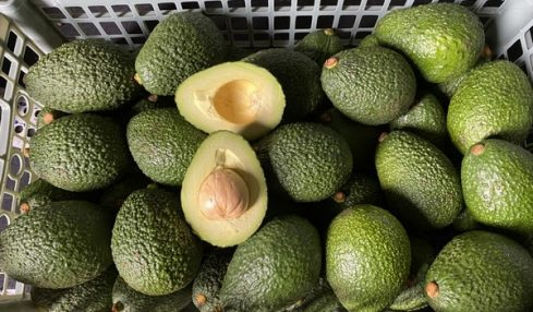 Hass Avocados