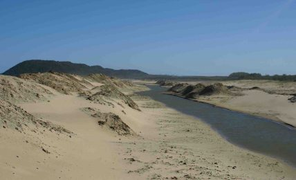 The Umfolozi river is a critical contributor of fresh water to the estuary. It was cut off during the 1950s
