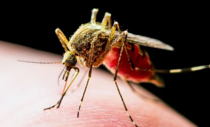 What makes mosquitoes tick and how to keep safe from them this summer, advice from a UP malaria expert