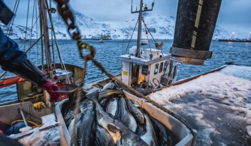 A new study calls for effective fisheries management systems to preserve fish populations
