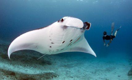 Mega fauna gets a Mozambican boost