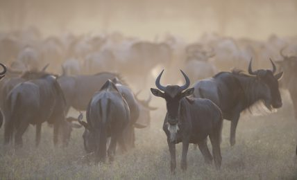 EU donates millions to African national parks