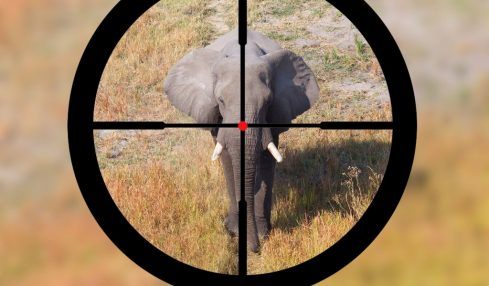 Zimbabwe sells licences to kill endangered elephants to rich trophy hunters