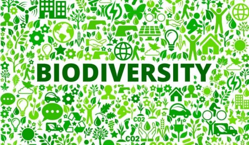 Global experts call for accelerated action to save Africa's rich biodiversity