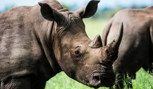High level discussion held to address the future of rhino population