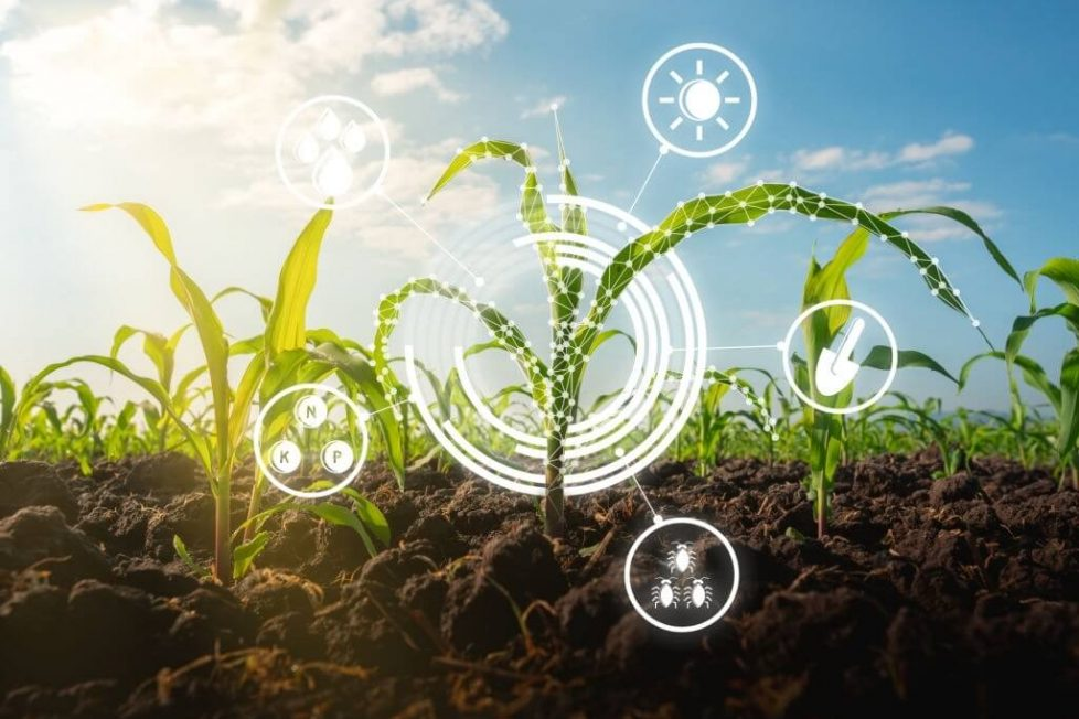 Agricultural innovation the answer to Africa's economic prosperity