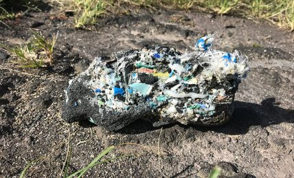 Mysterious fossil found on Camps Bay Beach