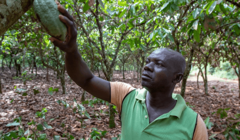 Corporate investment is benefitting Western Africa's unique habitat