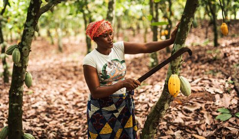 Ghanaian college unveils a machine to help cocoa farmers