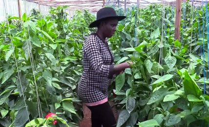 Quitting her well-paying job to feed the nation